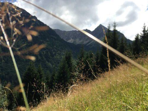 Bergwiese am Morgen