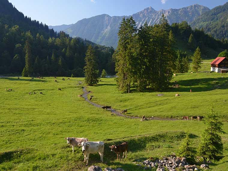 Bad Hindelang & Umgebung: Hintersteiner Tal